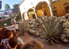 Visita Guiada a Tequila